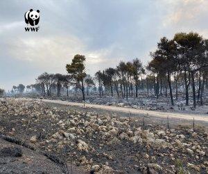 https://www.tp24.it/immagini_articoli/03-07-2020/1593768630-0-incendi-in-sicilia-wwf-per-combatterli-nbsp-serve-straordinaria-normalita.jpg
