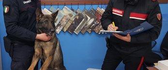 https://www.tp24.it/immagini_articoli/05-03-2020/1583402060-0-crack-cocaina-marijuana-arrestato-spacciatore-trapani.jpg
