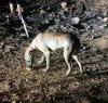 https://www.tp24.it/immagini_articoli/07-09-2020/1599485956-0-parte-per-la-germania-e-abbandona-il-cane-legato-ad-un-paletto-a-custonaci-nbsp.jpg