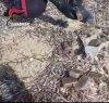 https://www.tp24.it/immagini_articoli/12-03-2021/1615531576-0-petrosino-trovato-un-carico-di-droga-in-spiaggia-nbsp.png