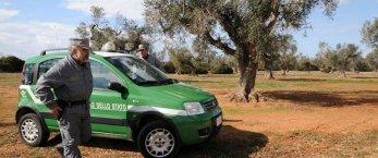 https://www.tp24.it/immagini_articoli/13-07-2020/1594656965-0-sicilia-i-forestali-devono-restituire-alla-regione-30-milioni-di-stipendi-nbsp.jpg