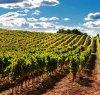https://www.tp24.it/immagini_articoli/25-06-2020/1593089957-0-sviluppo-sostenibile-della-vitivinicoltura-nasce-la-fondazione-sostain-sicilia.jpg