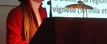 https://www.tp24.it/immagini_articoli/26-01-2019/1548485953-0-jose-rallo-sicilia-giovani-lavoro-agricoltura-turismo-nostro-futuro.jpg