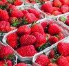 https://www.tp24.it/immagini_articoli/27-03-2020/1585298701-0-frutti-sole-marsala-dona-cestini-fragole-siciliane.jpg