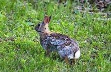 https://www.tp24.it/immagini_articoli/27-09-2020/1601198711-0-sicilia-il-tar-sospende-la-caccia-al-coniglio-accolto-il-ricorso-ambientalista-nbsp.jpg